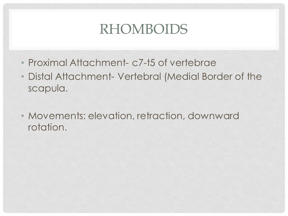 Rhomboids Proximal Attachment- c7-t5 of vertebrae