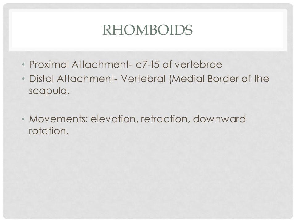 Rhomboids Proximal Attachment- c7-t5 of vertebrae