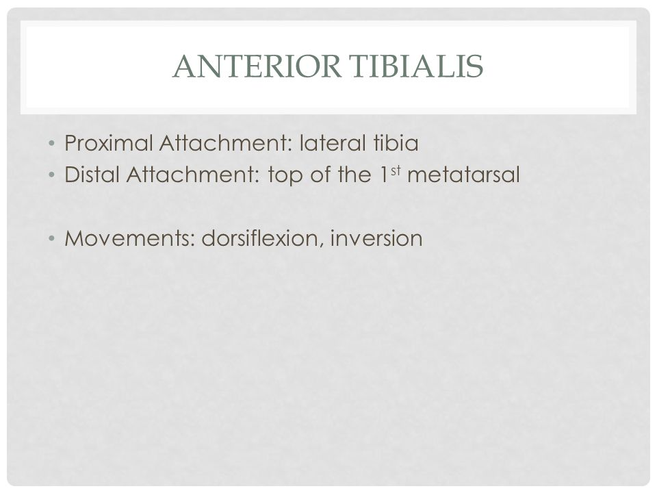 Anterior tibialis Proximal Attachment: lateral tibia