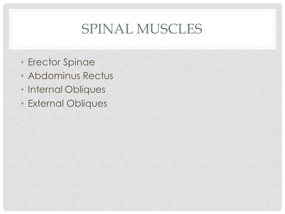 Spinal Muscles Erector Spinae Abdominus Rectus Internal Obliques