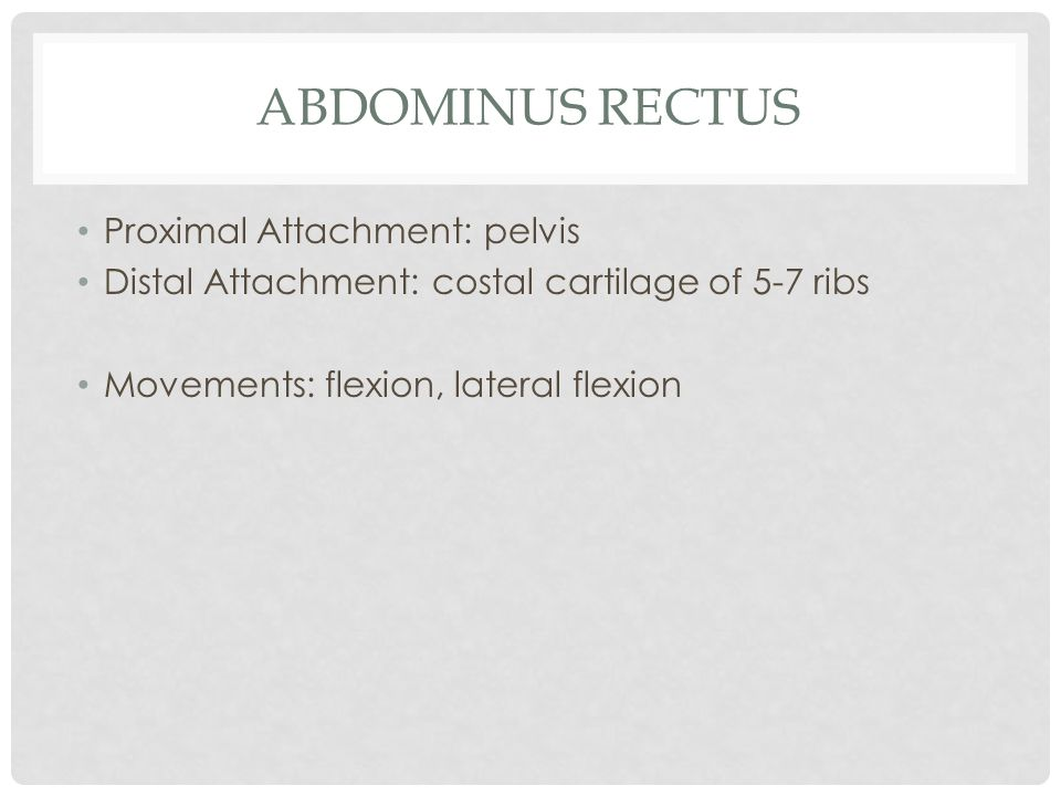 Abdominus Rectus Proximal Attachment: pelvis
