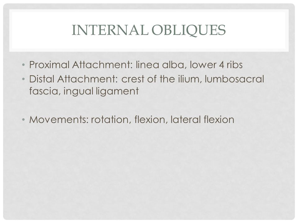 Internal Obliques Proximal Attachment: linea alba, lower 4 ribs