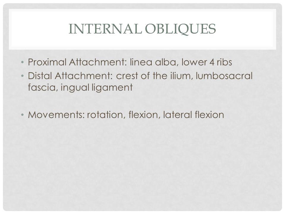 Internal Obliques Proximal Attachment: linea alba, lower 4 ribs