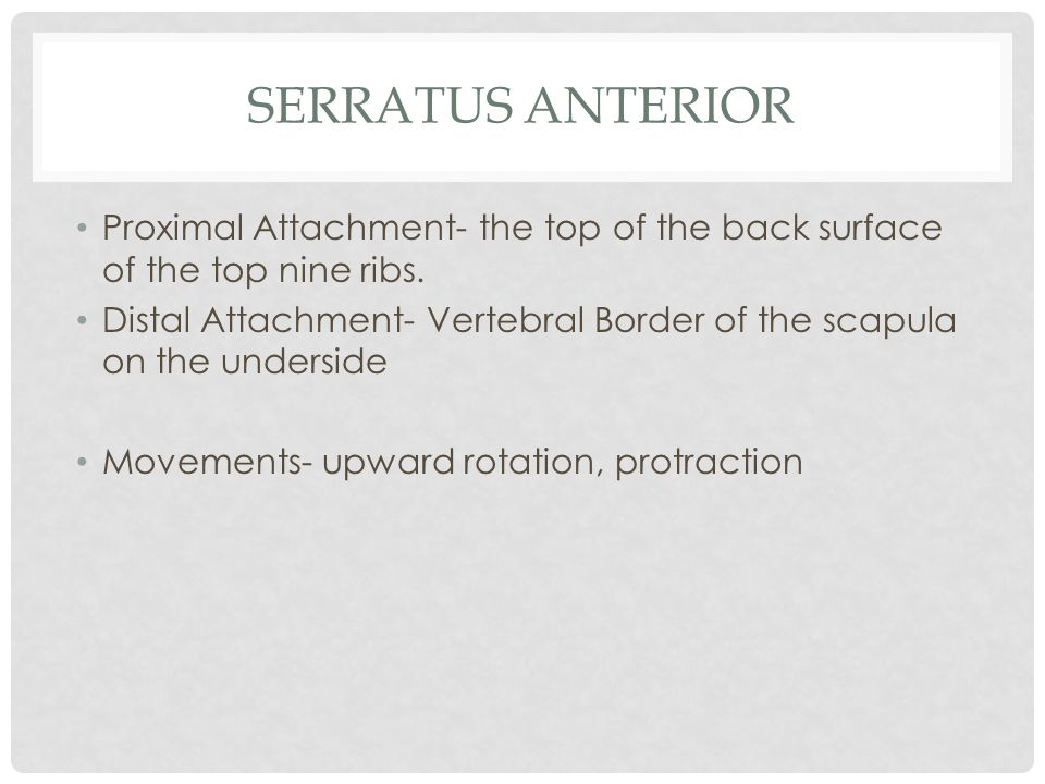 Serratus Anterior Proximal Attachment- the top of the back surface of the top nine ribs.