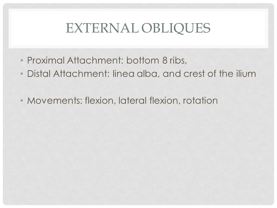 External obliques Proximal Attachment: bottom 8 ribs,