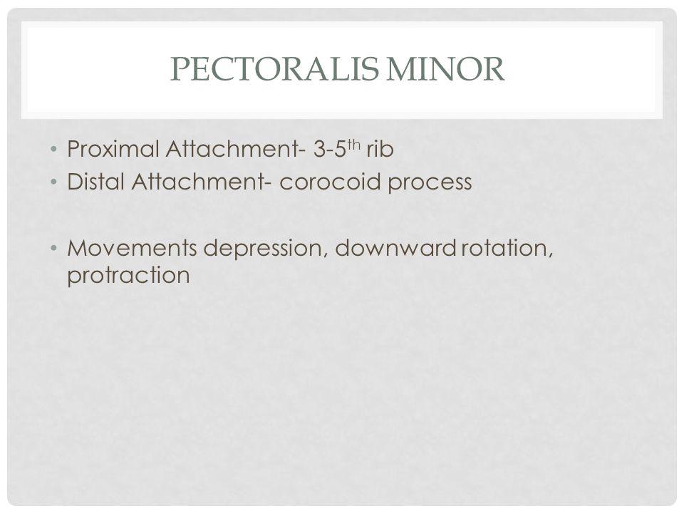 Pectoralis Minor Proximal Attachment- 3-5th rib