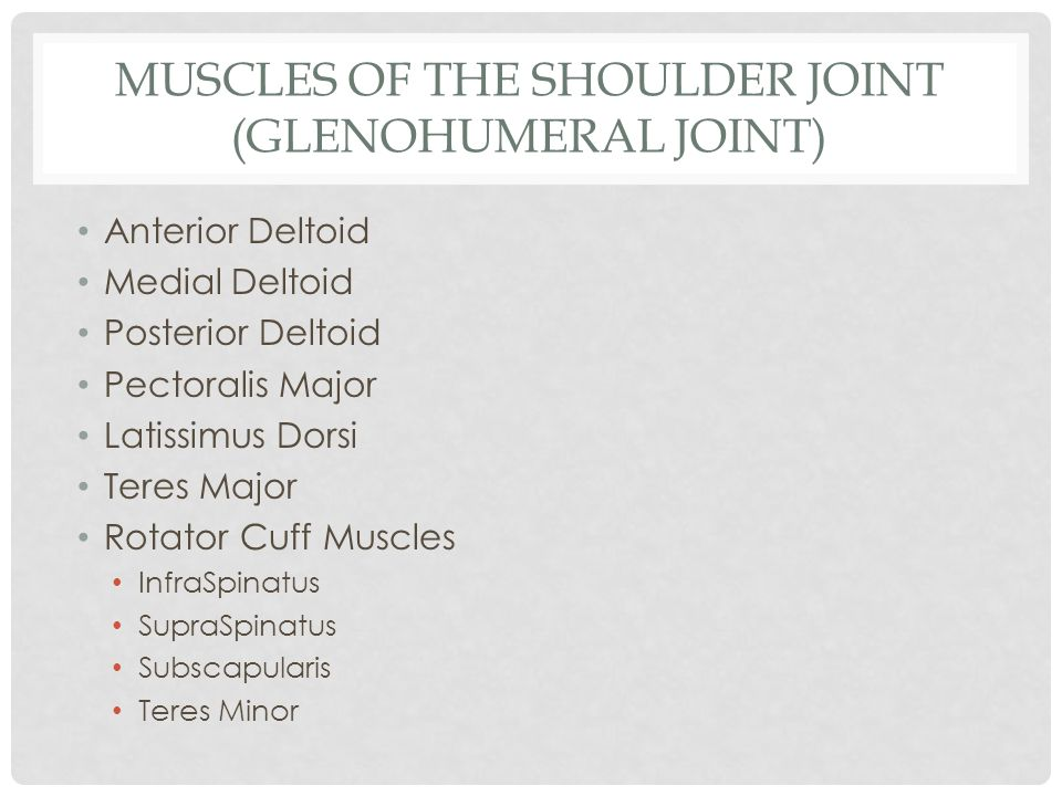 Muscles of the Shoulder joint (Glenohumeral joint)
