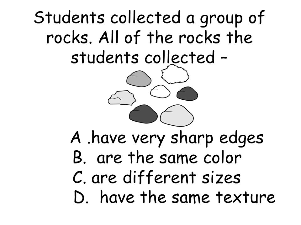 Students collected a group of rocks