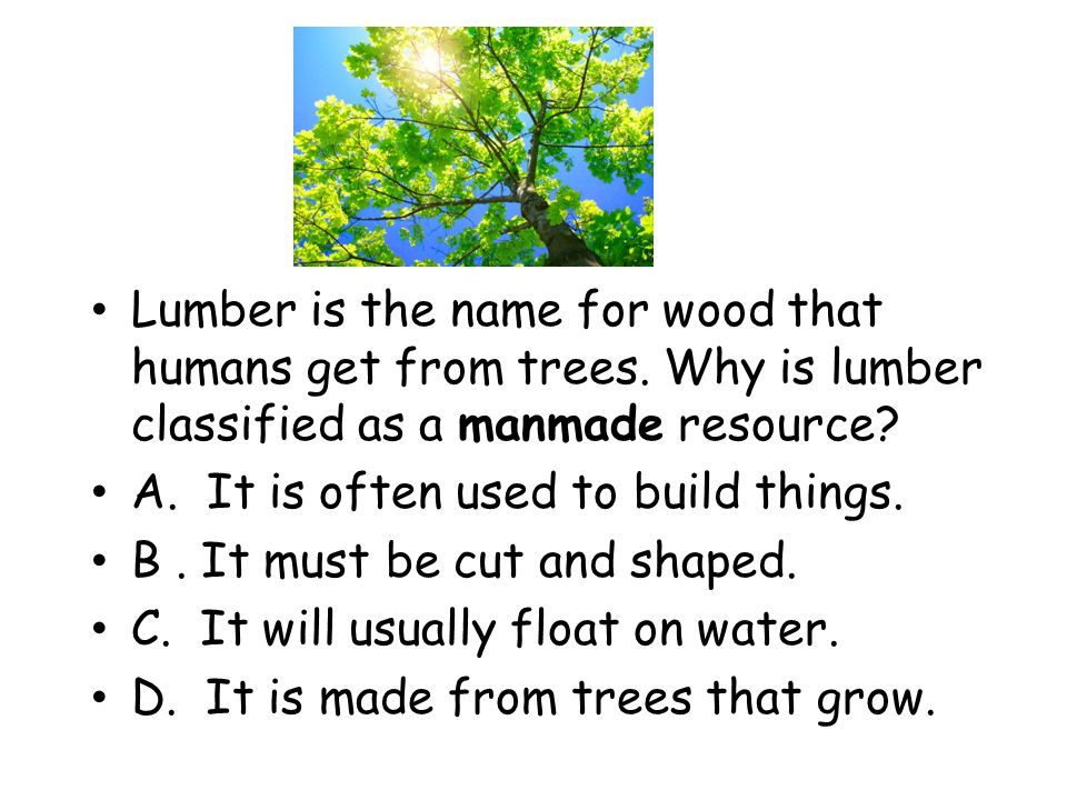 Lumber is the name for wood that humans get from trees