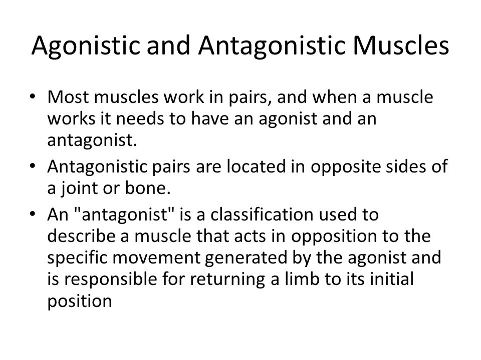 Agonistic and Antagonistic Muscles