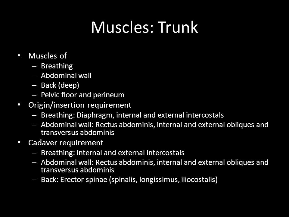 Muscles: Trunk Muscles of Origin/insertion requirement