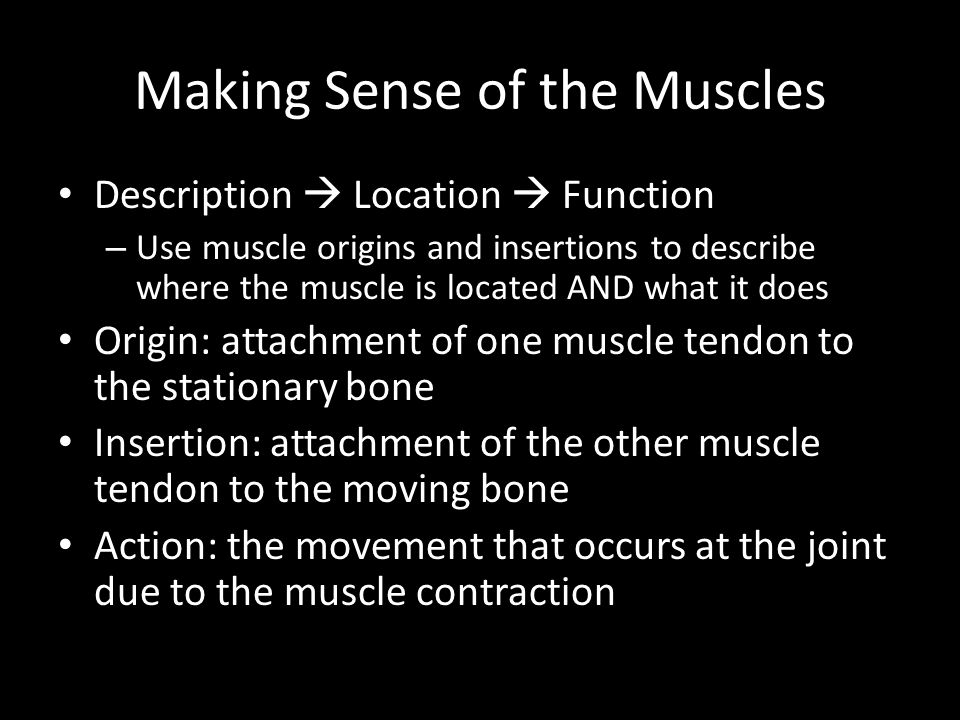 Making Sense of the Muscles