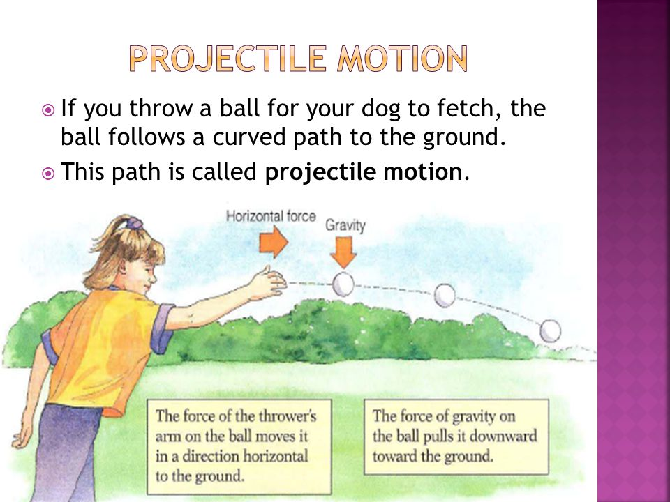 Projectile Motion If you throw a ball for your dog to fetch, the ball follows a curved path to the ground.