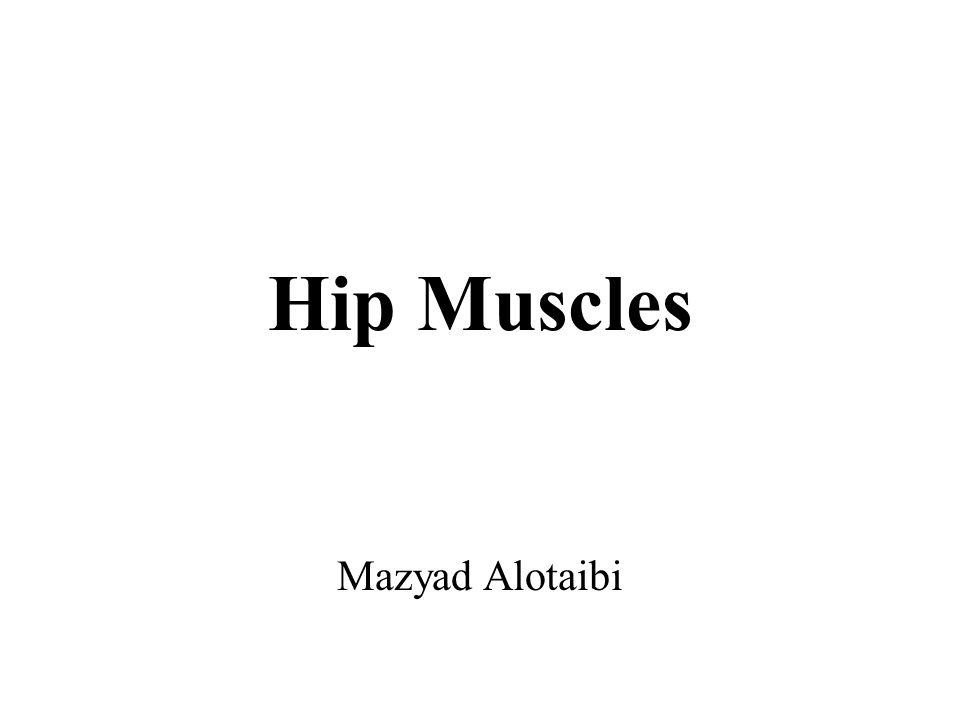 Hip Muscles Mazyad Alotaibi