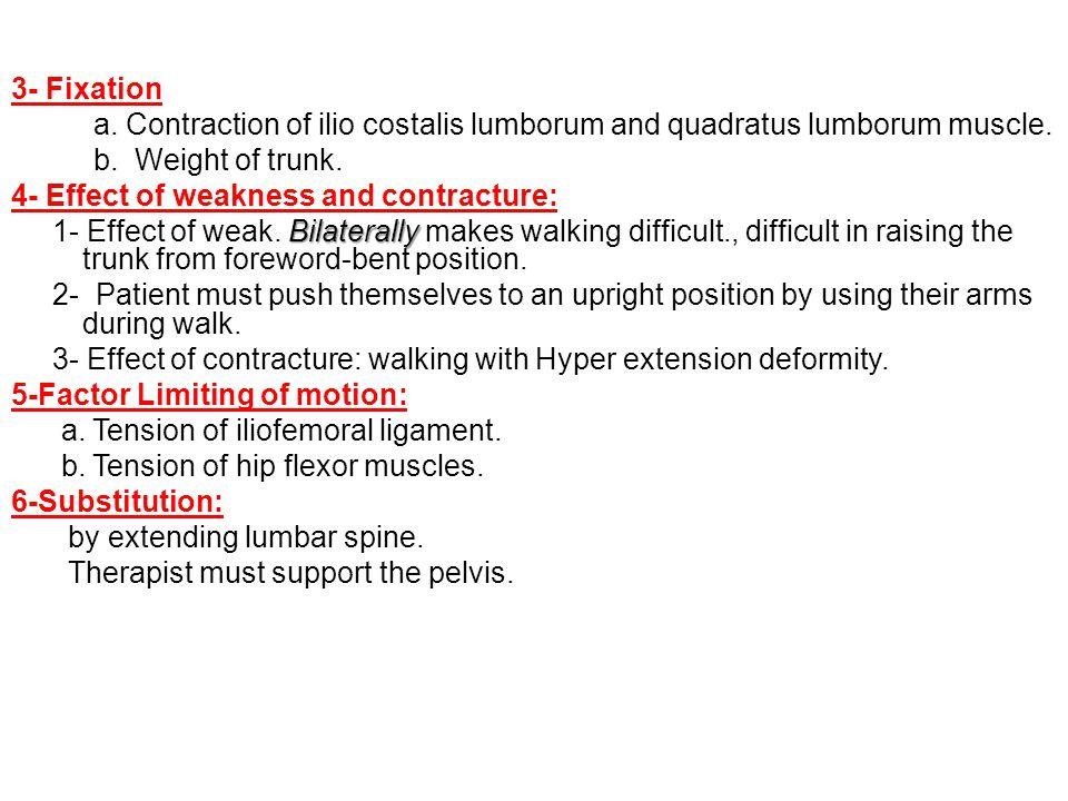 3- Fixation a. Contraction of ilio costalis lumborum and quadratus lumborum muscle. b. Weight of trunk.