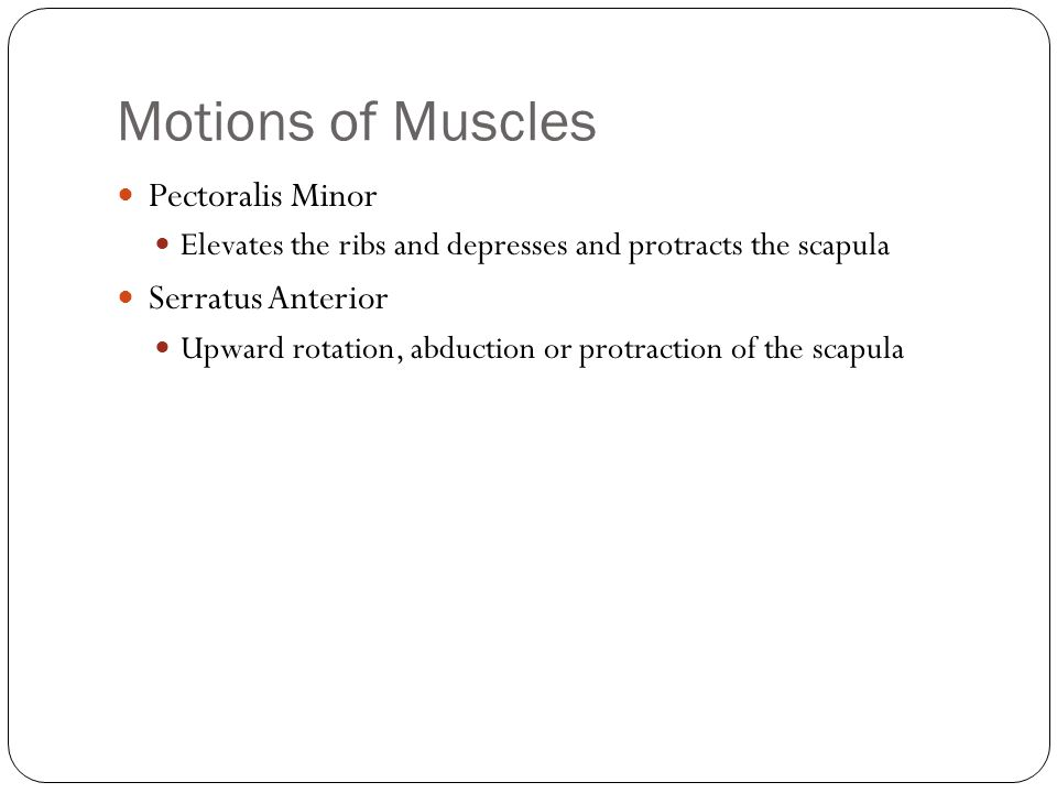 Motions of Muscles Pectoralis Minor Serratus Anterior