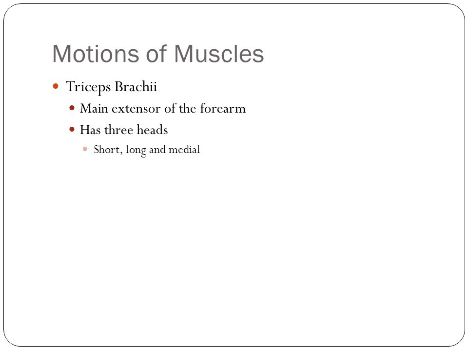 Motions of Muscles Triceps Brachii Main extensor of the forearm