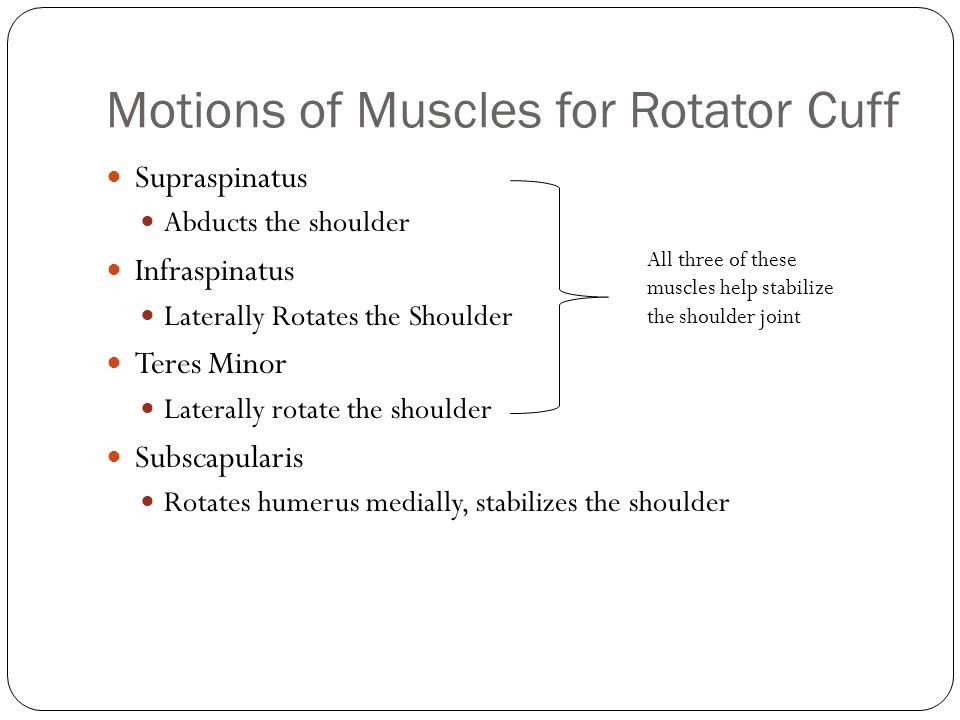 Motions of Muscles for Rotator Cuff