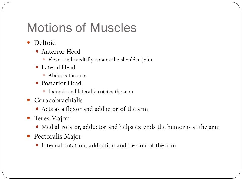 Motions of Muscles Deltoid Coracobrachialis Teres Major