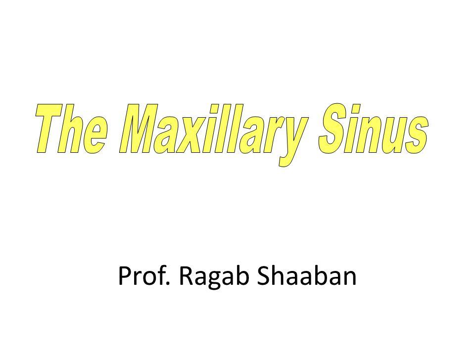 The Maxillary Sinus Prof. Ragab Shaaban
