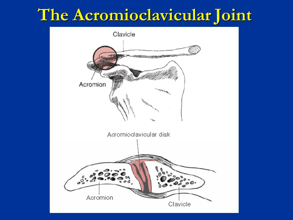 The Acromioclavicular Joint