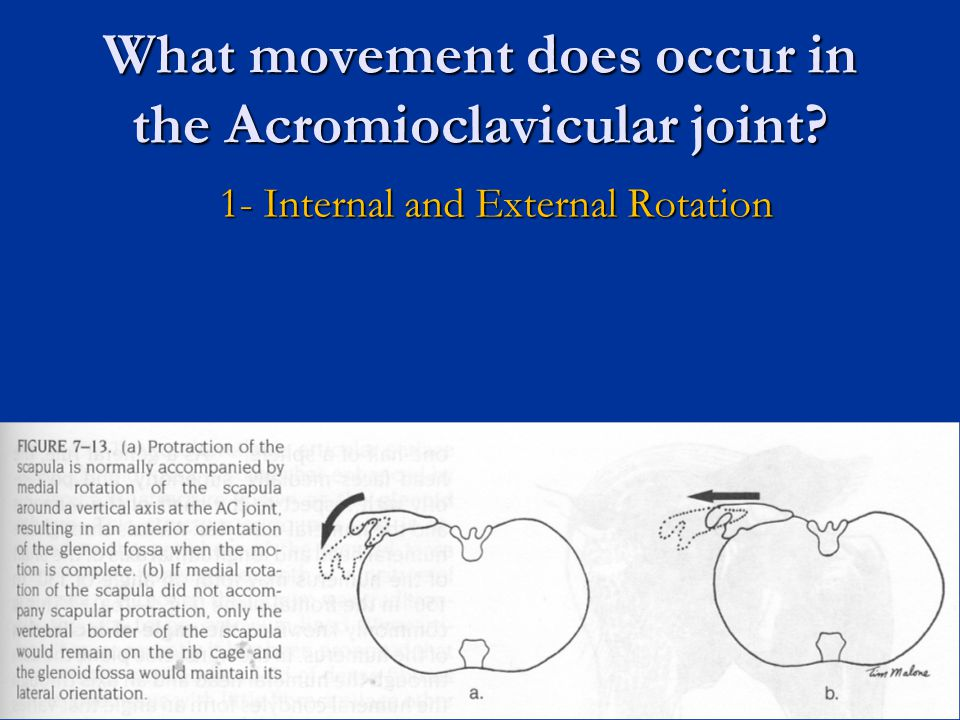 What movement does occur in the Acromioclavicular joint