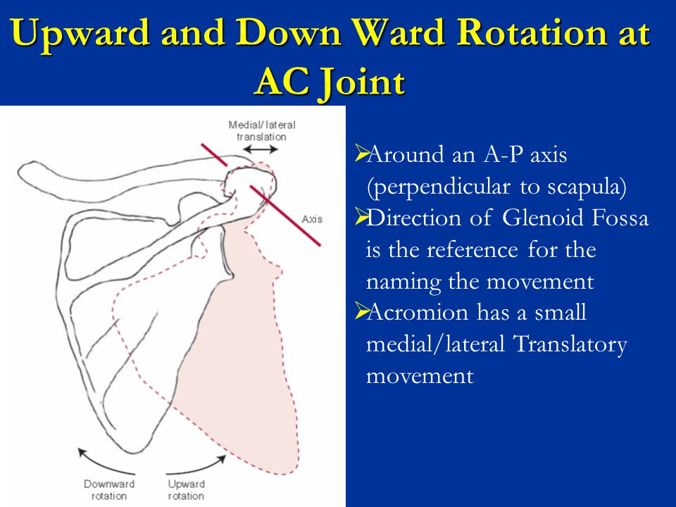 Upward and Down Ward Rotation at AC Joint