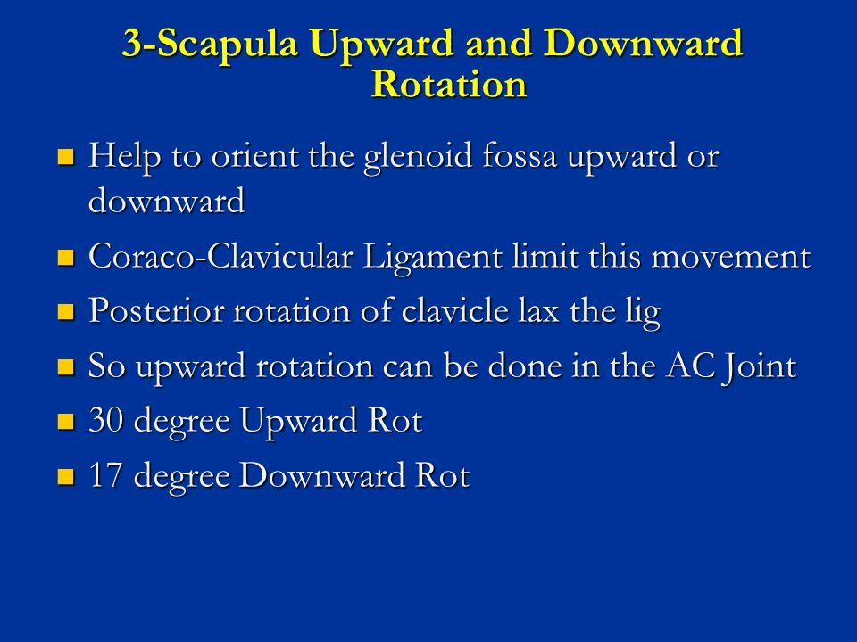 3-Scapula Upward and Downward Rotation