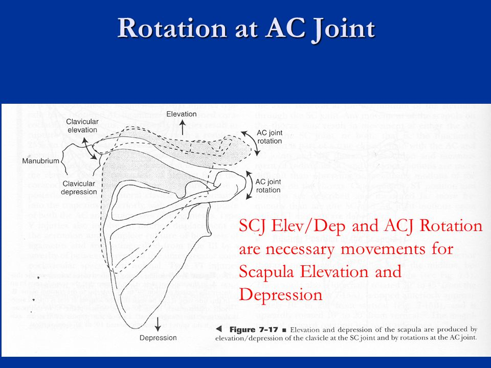 Rotation at AC Joint SCJ Elev/Dep and ACJ Rotation are necessary movements for Scapula Elevation and Depression.
