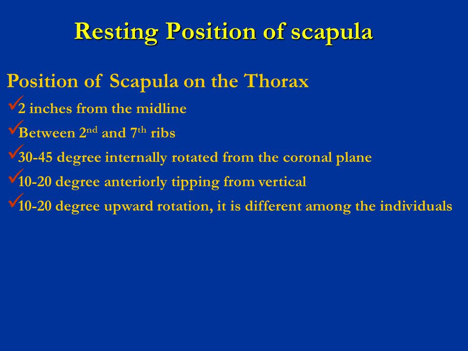 Resting Position of scapula