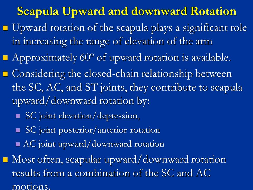 Scapula Upward and downward Rotation