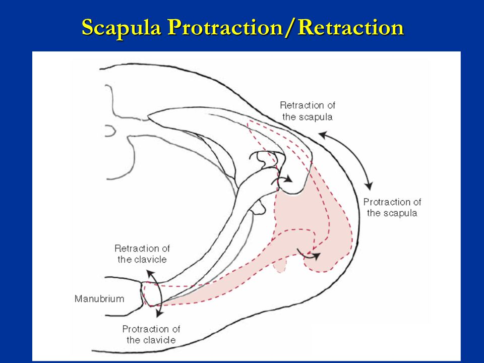Scapula Protraction/Retraction