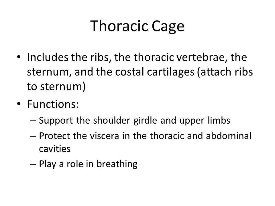 Thoracic Cage Includes the ribs, the thoracic vertebrae, the sternum, and the costal cartilages (attach ribs to sternum)
