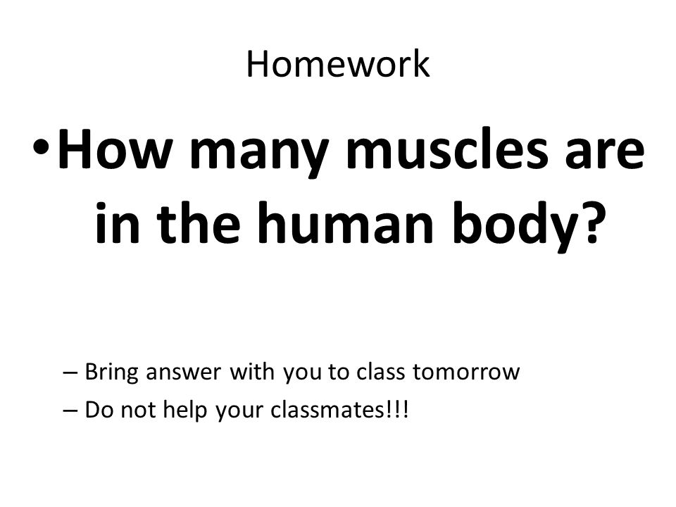 How many muscles are in the human body