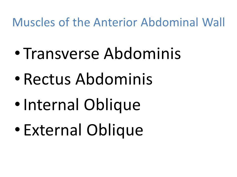 Muscles of the Anterior Abdominal Wall