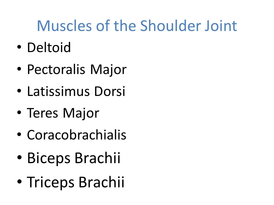 Muscles of the Shoulder Joint