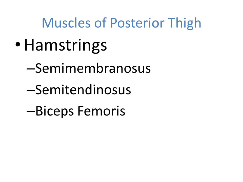 Muscles of Posterior Thigh