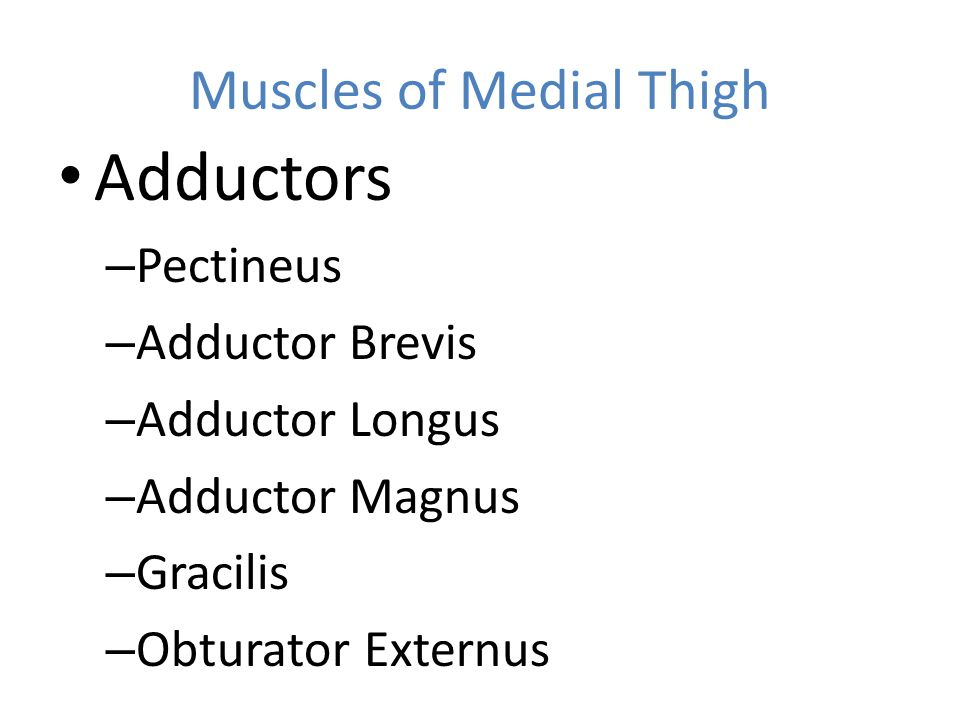 Muscles of Medial Thigh