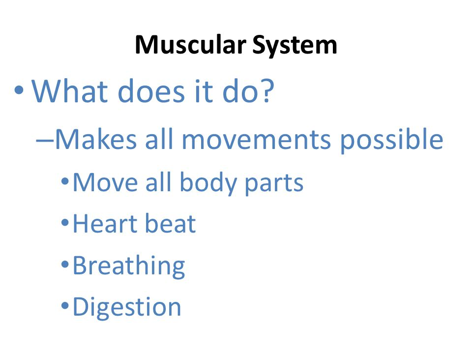 What does it do Makes all movements possible Muscular System