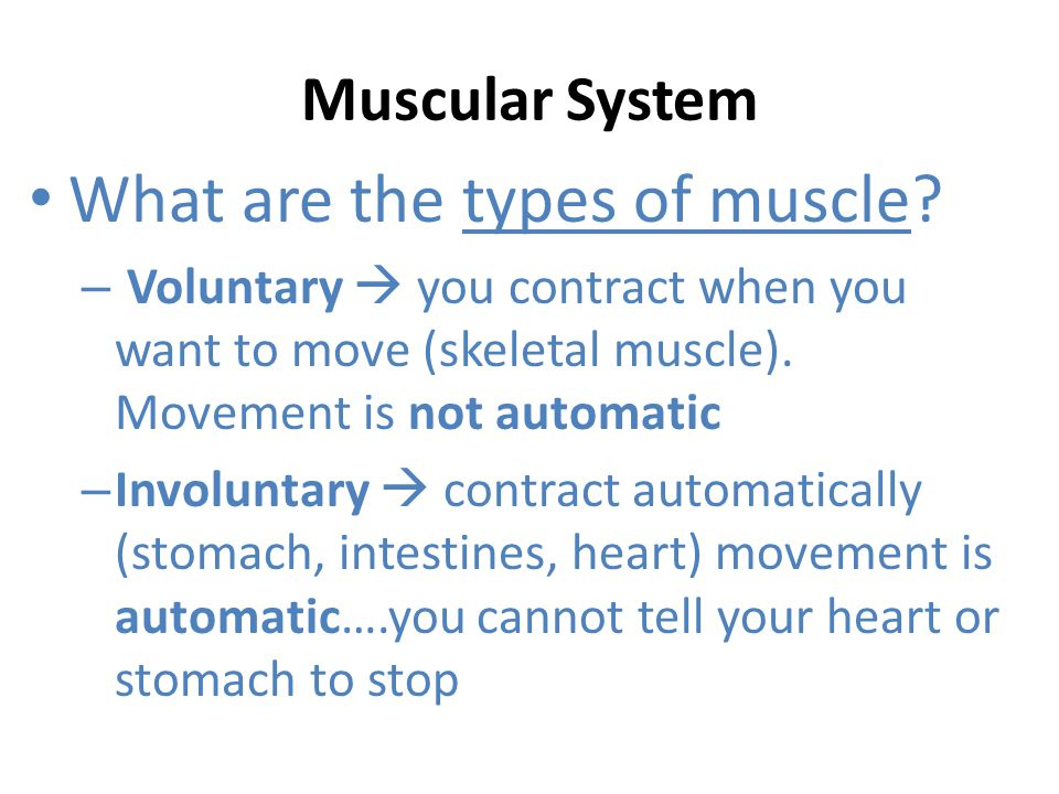 What are the types of muscle