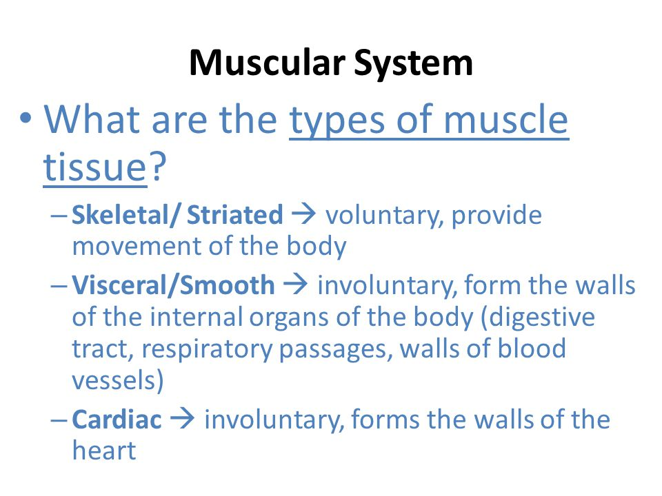 What are the types of muscle tissue