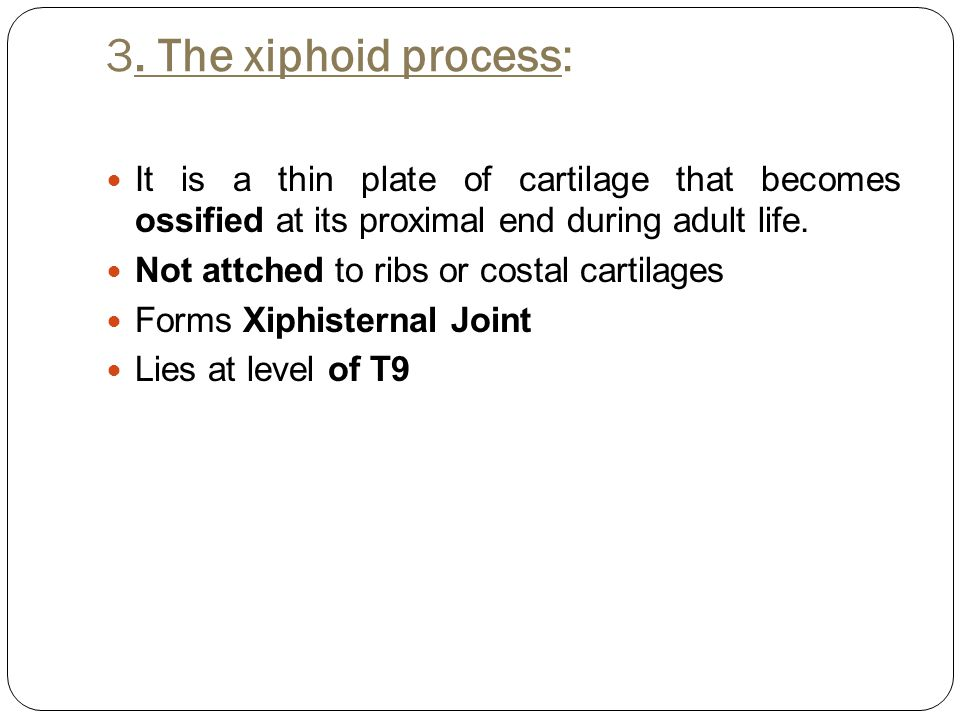 3. The xiphoid process: It is a thin plate of cartilage that becomes ossified at its proximal end during adult life.