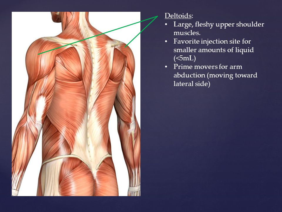 Deltoids: Large, fleshy upper shoulder muscles. Favorite injection site for smaller amounts of liquid (<5mL)