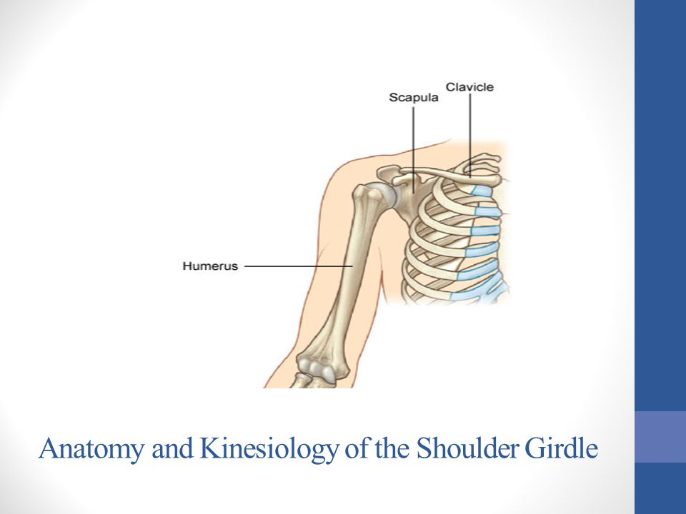 Anatomy And Kinesiology Of The Shoulder Girdle Ppt Video Online