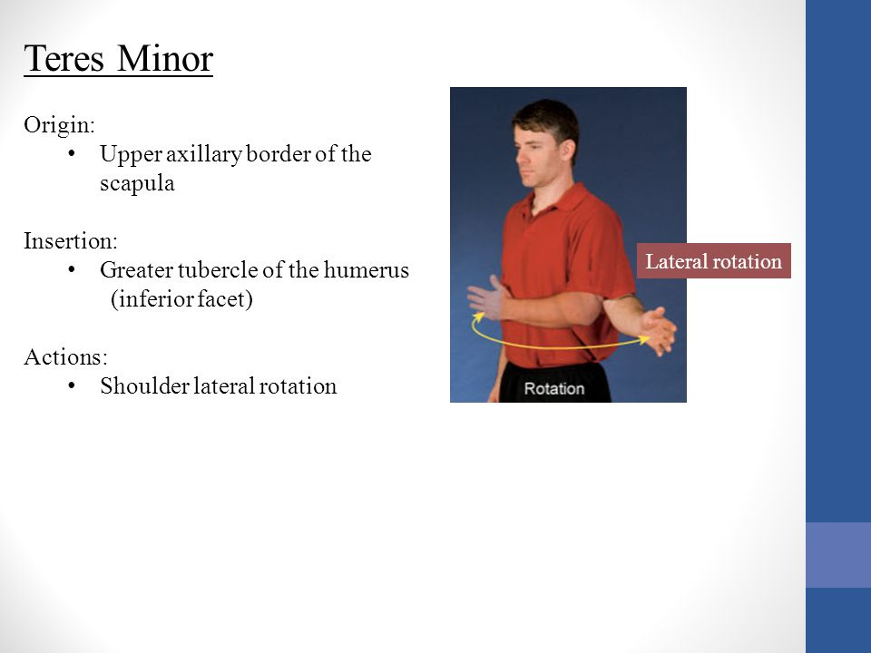 Teres Minor Origin: Upper axillary border of the scapula Insertion:
