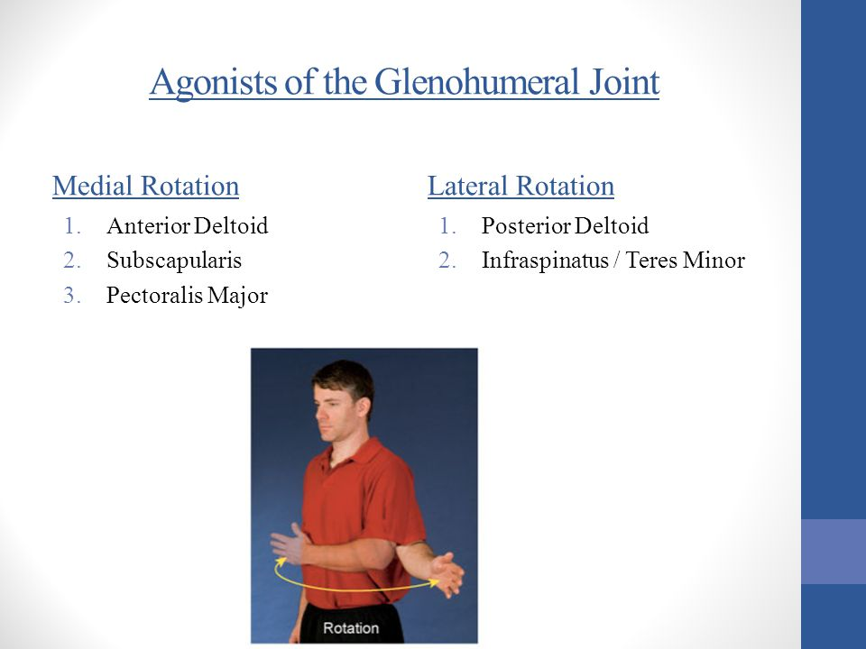 Agonists of the Glenohumeral Joint