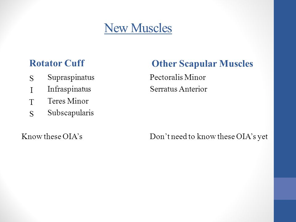 Other Scapular Muscles