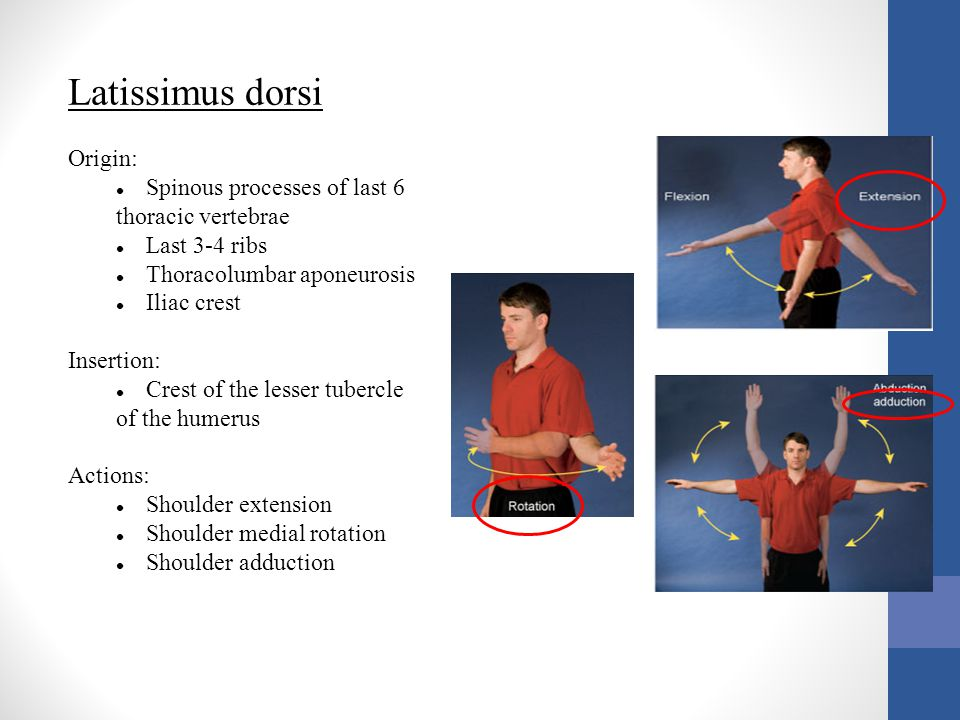 Latissimus dorsi Origin: Spinous processes of last 6