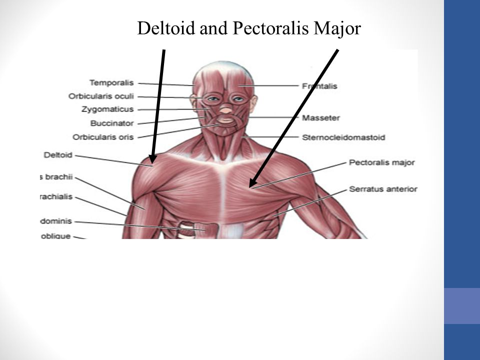 Deltoid and Pectoralis Major