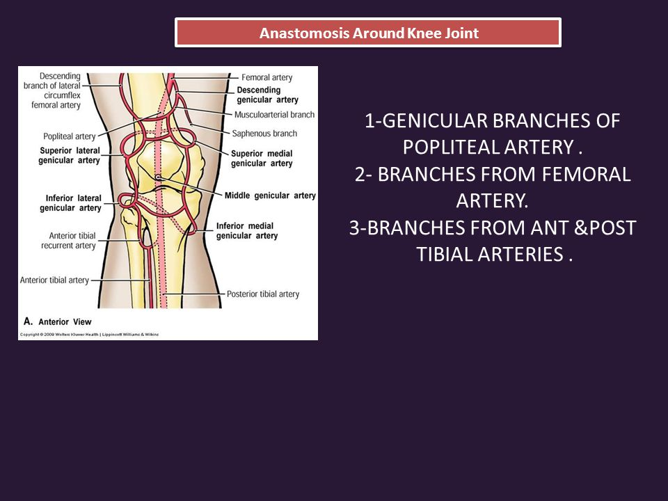 Anastomosis Around Knee Joint